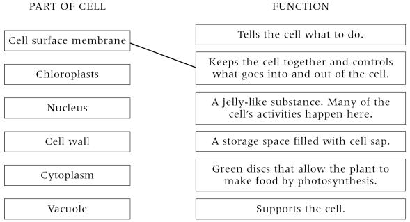 New Page 2 – Cell Organelles and Their Functions Worksheet