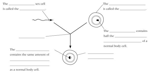 New page 2 2 look at the drawing of a sperm cell write down two ways in which it is adapted to its function ccuart Images