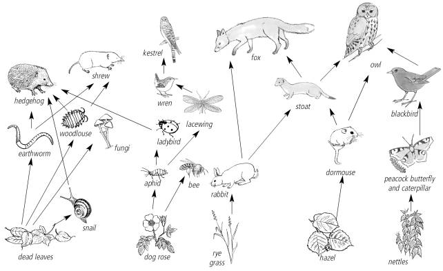 New Page 2 – Food Chain and Food Web Worksheet